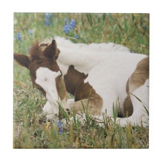 Close-up of Horse and Baby Colt Tile