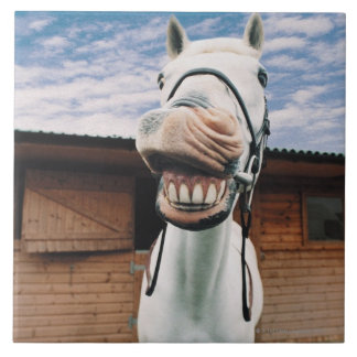Close-up of Horse with Mouth Open Large Square Tile