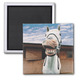 Close-up of Horse with Mouth Open Square Magnet