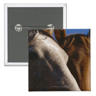 Close Up of Horses Button
