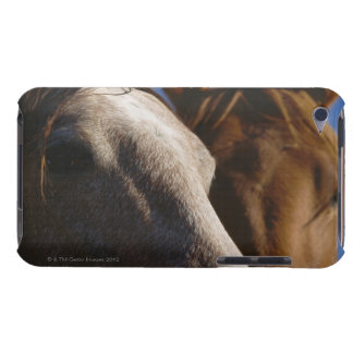 Close Up of Horses Barely There iPod Cover