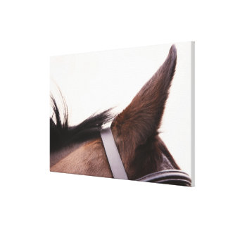 close-up of horses ear with bridal canvas print