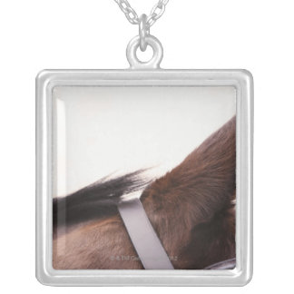 close-up of horses ear with bridal silver plated necklace