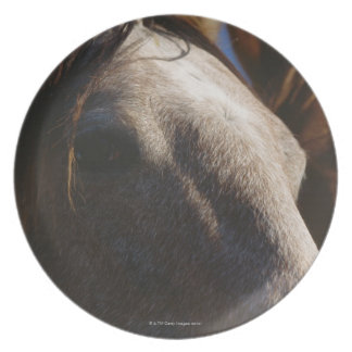 Close Up of Horses Plate