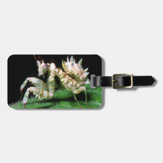 Close-Up Of Hottentot Mantis Luggage Tag