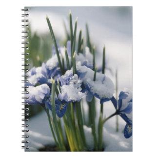 Close-up of Iris Note Book