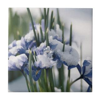 Close-up of Iris Tile