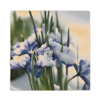 Close-up of Iris Wood Coaster