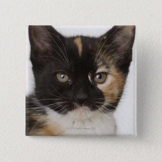 Close up of kitten 15 cm square badge