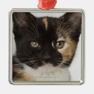 Close up of kitten christmas ornament