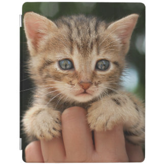 Close Up Of Kitten iPad Cover