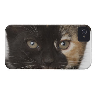 Close up of kitten iPhone 4 case