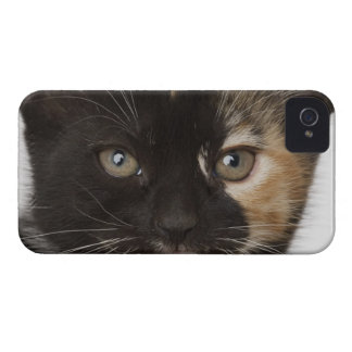 Close up of kitten iPhone 4 cases