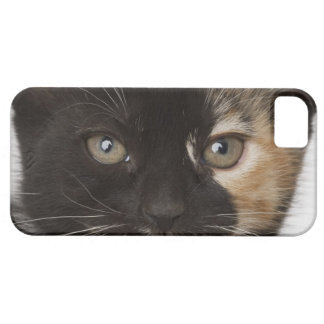 Close up of kitten iPhone 5 case
