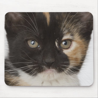 Close up of kitten mouse mat