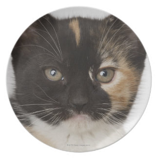 Close up of kitten plate
