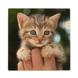 Close Up Of Kitten Wood Coaster