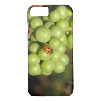 Close up of lady bug on green Pinot Noir grapes iPhone 8/7 Case