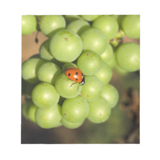 Close up of lady bug on green Pinot Noir grapes Notepad