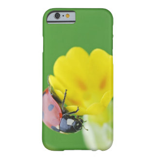 Close-Up of Ladybug Barely There iPhone 6 Case
