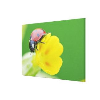 Close-Up of Ladybug Canvas Print