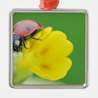 Close-Up of Ladybug Christmas Ornament