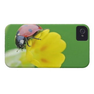 Close-Up of Ladybug iPhone 4 Cover