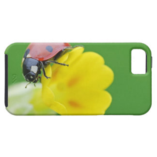Close-Up of Ladybug iPhone 5 Case