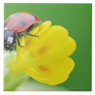 Close-Up of Ladybug Tile