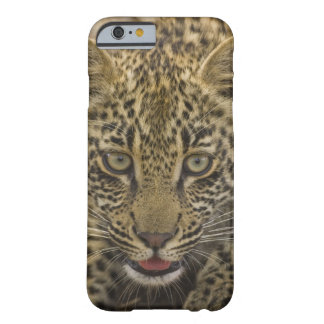 Close up of Leopard, Greater Kruger National 2 Barely There iPhone 6 Case