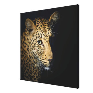 Close up of Leopard, Greater Kruger National 2 Canvas Print