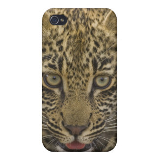Close up of Leopard, Greater Kruger National 2 iPhone 4/4S Cover