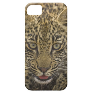 Close up of Leopard, Greater Kruger National 2 iPhone 5 Case