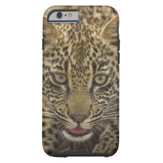Close up of Leopard, Greater Kruger National 2 Tough iPhone 6 Case