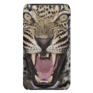 Close up of leopard growling barely there iPod cases