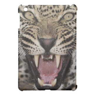 Close up of leopard growling cover for the iPad mini