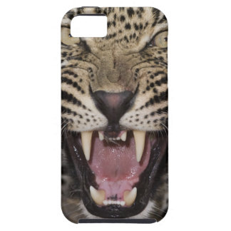 Close up of leopard growling iPhone 5 cover