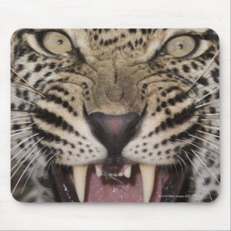 Close up of leopard growling mouse mat