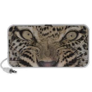 Close up of leopard growling notebook speaker