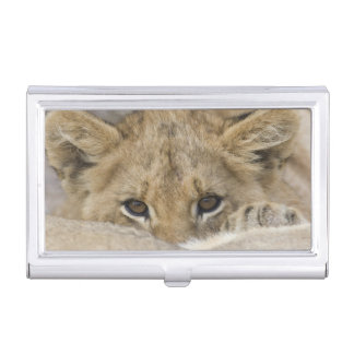 Close up of lion cub's face business card holder