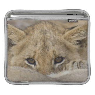 Close up of lion cub's face iPad sleeves