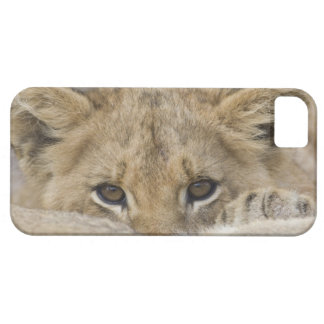 Close up of lion cub's face iPhone 5 cases