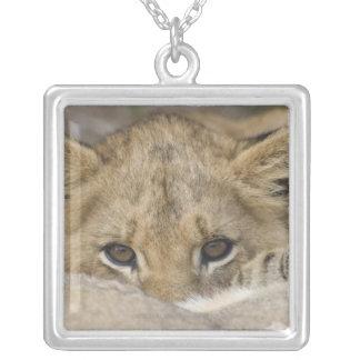 Close up of lion cub's face square pendant necklace