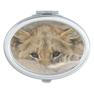 Close up of lion cub's face vanity mirrors