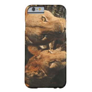 Close up of Lioness (Panthera leo) and cub Barely There iPhone 6 Case