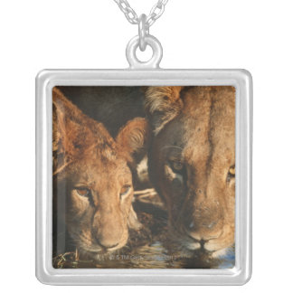 Close up of Lioness (Panthera leo) and cub Silver Plated Necklace