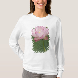 Close up of Lotus flower, Nelumbo nucifera), T-Shirt