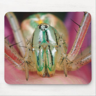 Close Up Of Lynx Spider (Oxyopidae) On The Petal Mouse Pad