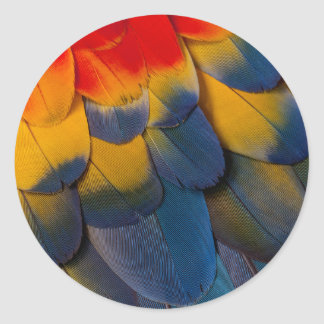 Close Up Of Macaw Feathers Classic Round Sticker