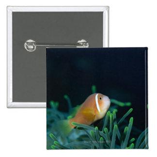 Close up of Maldives anemone fish, Maldives 15 Cm Square Badge
